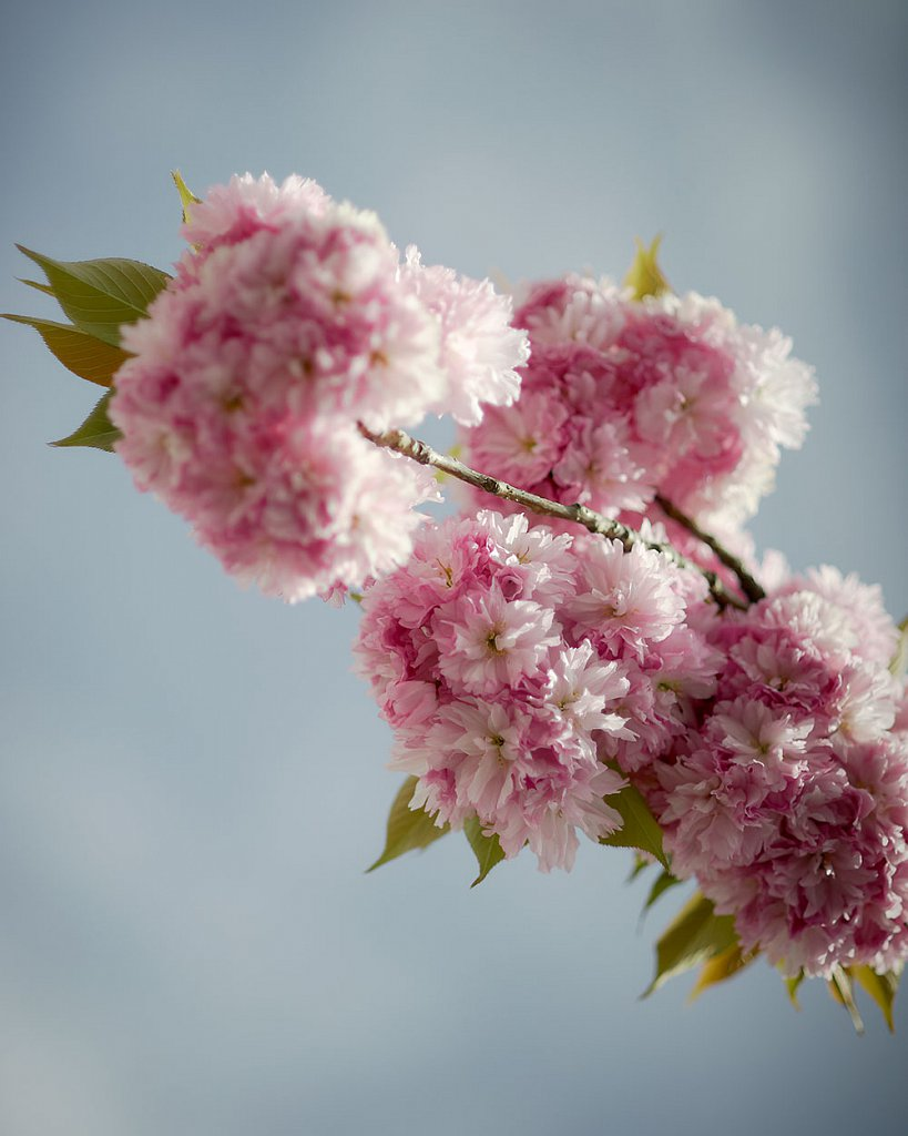 Blossom-2.jpg